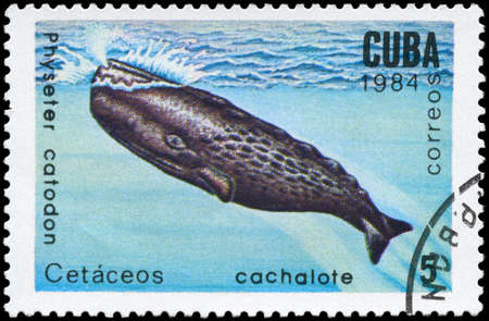 CUBA - CIRCA 1984: A Stamp printed in CUBA shows image of a Sperm Whale with the description