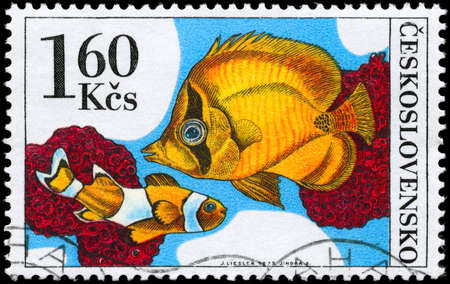 CZECHOSLOVAKIA - CIRCA 1975: A Stamp printed in CZECHOSLOVAKIA shows image of a Orange Clownfish and Chaetodon from the series