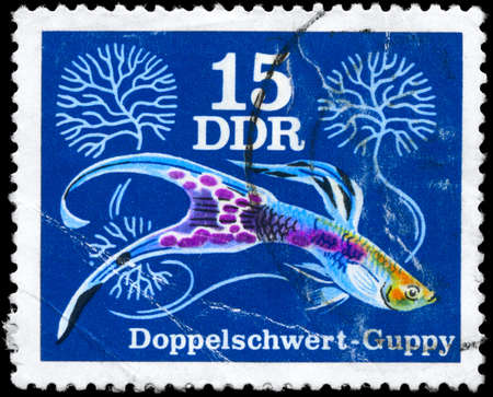 guppy: GDR - CIRCA 1976: A Stamp printed in GDR shows image of a Guppy  from the series Various guppies, circa 1976  Stock Photo