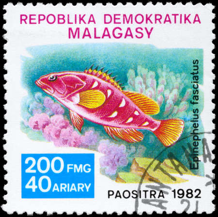 epinephelus: MALAGASY - CIRCA 1982: A Stamp printed in MALAGASY shows image of a Grouper with the inscription Epinephelus fasciatus from the series Local Fish, circa 1982