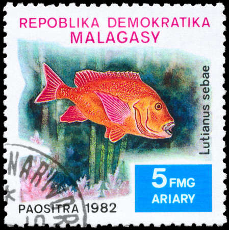 MALAGASY - CIRCA 1982: A Stamp printed in MALAGASY shows image of a Snapper with the inscription