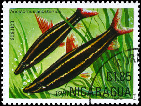 NICARAGUA - CIRCA 1981: A Stamp printed in NICARAGUA shows image of a Anostomus with the description
