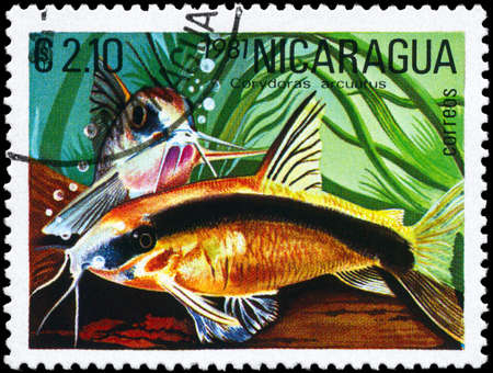 bullhead: NICARAGUA - CIRCA 1981: A Stamp printed in NICARAGUA shows image of a Corydoras with the description Corydoras arcuatus from the series Tropical Fish, circa 1981
