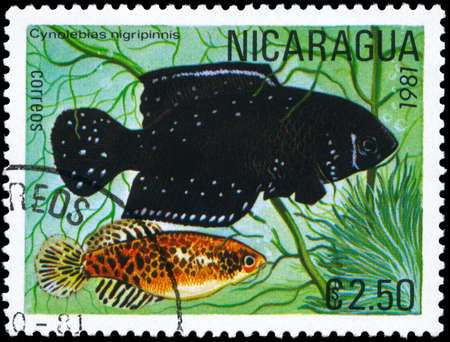 limnetic: NICARAGUA - CIRCA 1981: A Stamp printed in NICARAGUA shows image of a Cynolebias with the description Cynolebias nigripinnis from the series Tropical Fish, circa 1981