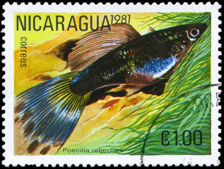 molly: NICARAGUA - CIRCA 1981: A Stamp printed in NICARAGUA shows image of a Guppy with the description Poecilia reticulata from the series Tropical Fish, circa 1981  Stock Photo