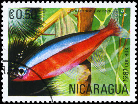 neon tetra: NICARAGUA - CIRCA 1981: A Stamp printed in NICARAGUA shows image of a Red Neon with the description Cheirodon axelrodi from the series Tropical Fish, circa 1981 Stock Photo