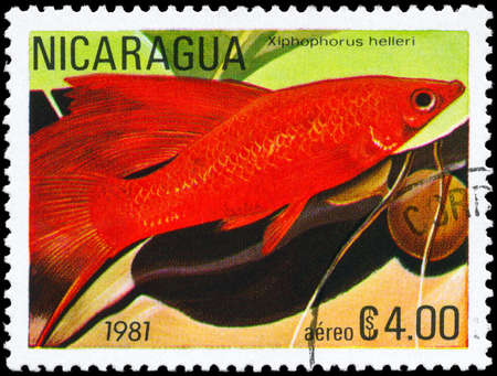 NICARAGUA - CIRCA 1981: A Stamp printed in NICARAGUA shows image of a Platyfish with the description