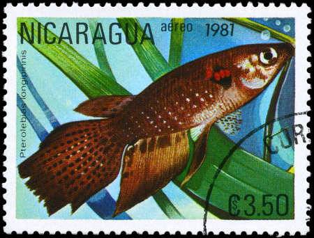 limnetic: NICARAGUA - CIRCA 1981: A Stamp printed in NICARAGUA shows image of a Pterolebias with the description Pterolebias longipinnis from the series Tropical Fish, circa 1981 Stock Photo