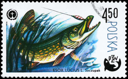 limnetic: POLAND - CIRCA 1979: A Stamp printed in POLAND shows image of a Pike with the description Esox lucius from the series Fish and Environmental Protection Emblem, circa 1979 Stock Photo