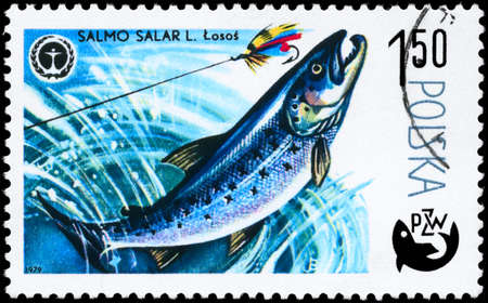 salmon fishery: POLAND - CIRCA 1979: A Stamp printed in POLAND shows image of a Atlantic Salmon with the description Salmo salar from the series Fish and Environmental Protection Emblem, circa 1979 Stock Photo