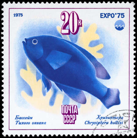 USSR - CIRCA 1975: A Stamp printed in USSR shows image of a Chrysiptera with the description