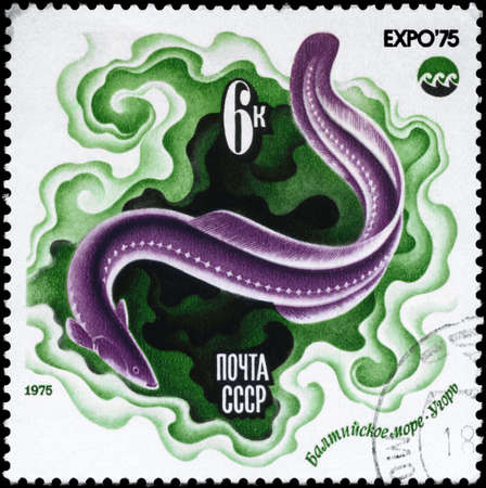USSR - CIRCA 1975: A Stamp printed in USSR shows image of a Eel, Baltic Sea from the series