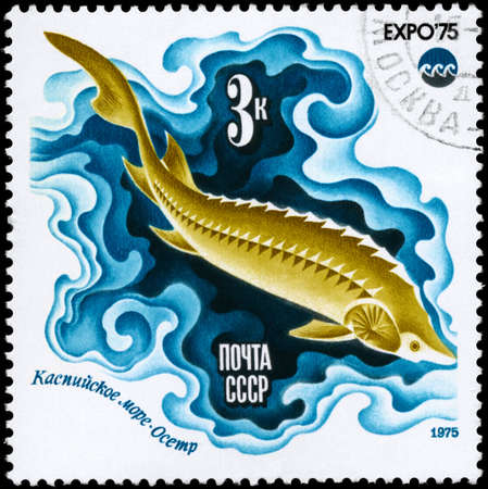 limnetic: USSR - CIRCA 1975: A Stamp printed in USSR shows image of a Sturgeon, Caspian Sea from the series Oceanexpo 75 Emblem, circa 1975