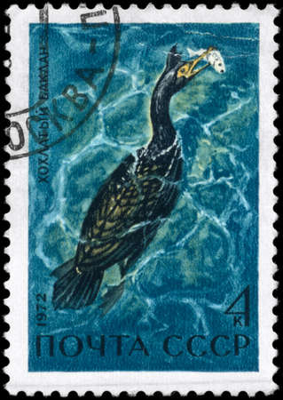 USSR - CIRCA 1972: A Stamp printed in USSR shows image of a Bering's Cormorant  from the series