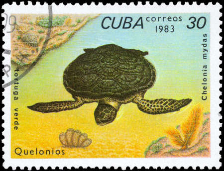 subsea: CUBA - CIRCA 1983: A Stamp printed in CUBA shows the image of a Green Turtle with the description Chelonia mydas from the series Turtles, circa 1983