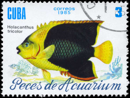 CUBA - CIRCA 1985: A Stamp printed in CUBA shows image of a Holacanthus tricolor from the series