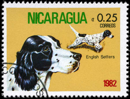 NICARAGUA - CIRCA 1982: A Stamp printed in NICARAGUA shows image of a English Setter from the series Dogs, circa 1982 photo