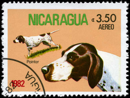 NICARAGUA - CIRCA 1982: A Stamp printed in NICARAGUA shows image of a Pointer from the series Dogs, circa 1982 photo