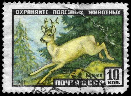 USSR - CIRCA 1961: A Stamp printed in USSR shows image of a Roedeer with the description