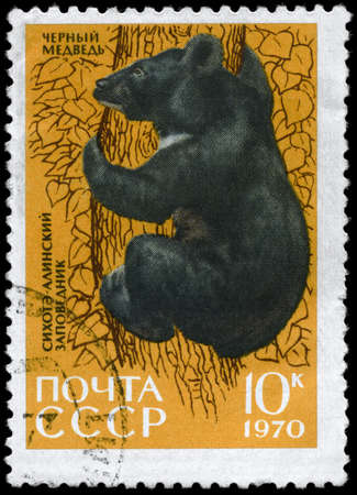 USSR - CIRCA 1970: A Stamp printed in USSR shows image of a Asiatic Black Bear from the series