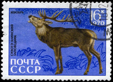 USSR - CIRCA 1970: A Stamp printed in USSR shows image of a Red Deer from the series Animals from the Sikhote-Alin Reserve, circa 1970 photo