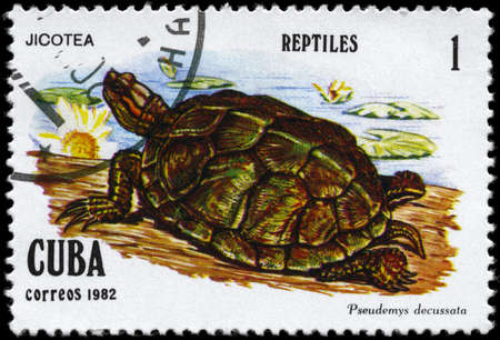 CUBA - CIRCA 1982: A Stamp printed in CUBA shows the image of a Tortoise with the description Pseudemys decussata from the series Reptiles, circa 1982 Stock Photo