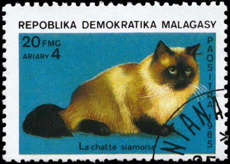 perforated stamp: MALAGASY REPUBLIC - CIRCA 1985: A Stamp printed in MALAGASY REPUBLIC shows image of a Siamese Cat from the series Cats and Dogs, circa 1985
