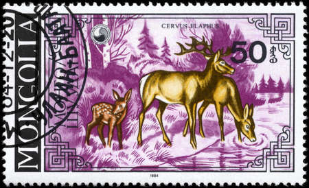 MONGOLIA - CIRCA 1984: A Stamp printed in MONGOLIA shows image of a Deers with the description