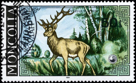 MONGOLIA - CIRCA 1984: A Stamp printed in MONGOLIA shows image of a Stag with the description