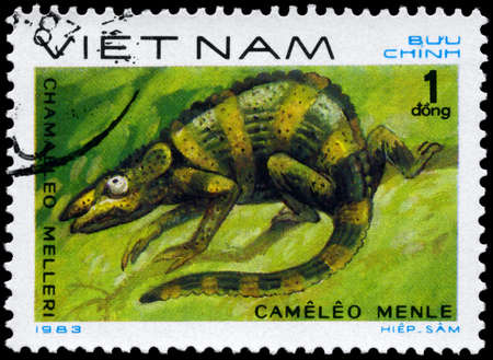VIETNAM - CIRCA 1983: A Stamp printed in VIETNAM shows the image of a Mellers Chameleon with the description Chamaeleo melleri from the series Reptiles, circa 1983 photo