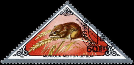 pallas: MONGOLIA - CIRCA 1983: A Stamp printed in MONGOLIA shows image of a Harvest Mouse with the designation Micromys minutus pallas from the series Rodents, circa 1983