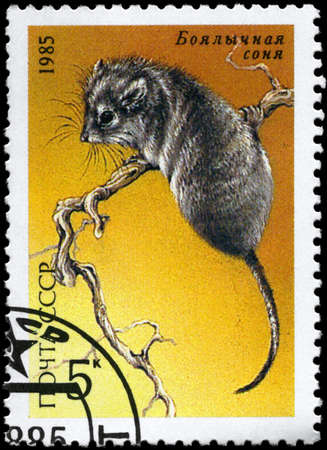 USSR - CIRCA 1985: A Stamp printed in USSR shows image of a Desert Dormouse from the series