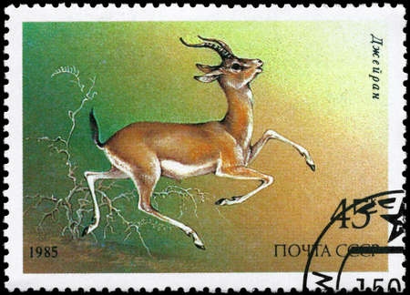 USSR - CIRCA 1985: A Stamp printed in USSR shows image of a Goitered Gazelle from the series