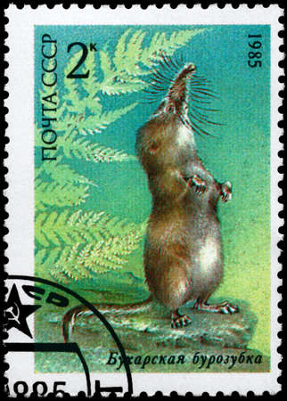 ussuri: USSR - CIRCA 1985: A Stamp printed in USSR shows image of a Ussuri Shrew from the series Endangered Wildlife, circa 1985
