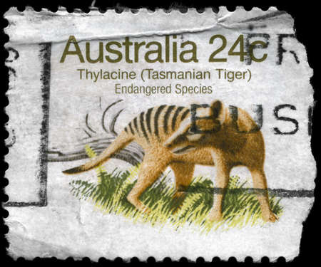 AUSTRALIA - CIRCA 1981: A Stamp printed in AUSTRALIA shows the image of a Thylacine (Tasmanian Tiger) with the description Endangered Species, series, circa 1981 photo