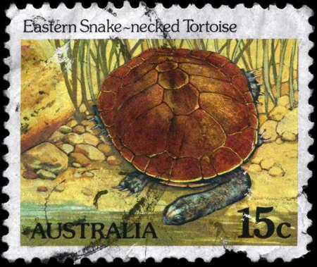 AUSTRALIA - CIRCA 1984: A Stamp printed in AUSTRALIA shows the image of a Eastern Snake-necked Tortoise, series, circa 1984 photo