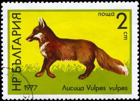 BULGARIA - CIRCA 1977: A Stamp printed in BULGARIA shows image of a Red Fox with the description
