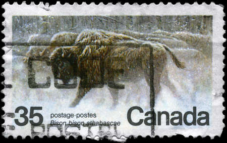 CANADA - CIRCA 1981: A Stamp strip printed in CANADA shows the image of Wood Bisons with the inscription