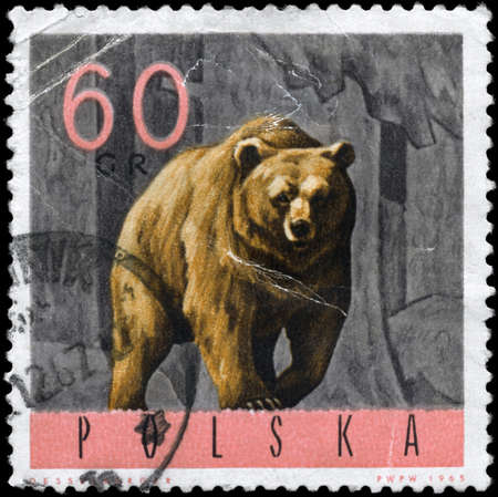 POLAND - CIRCA 1965: A Stamp printed in POLAND shows image of a Brown Bear, series, circa 1965 photo