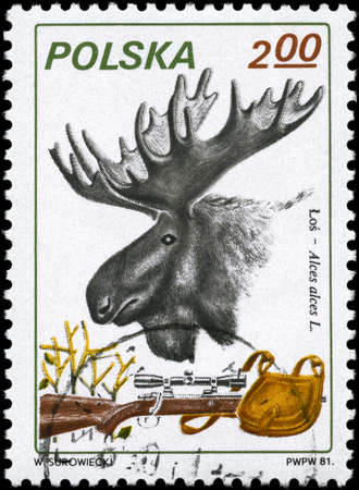 POLAND - CIRCA 1981: A Stamp printed in POLAND shows image of a Moose, Rifle and Pouch with the description Alces alces L., series, circa 1981 photo