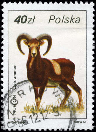 POLAND - CIRCA 1986: A Stamp printed in POLAND shows image of a Argali with the description Ovis ammon from the series Wildlife, circa 1986 photo