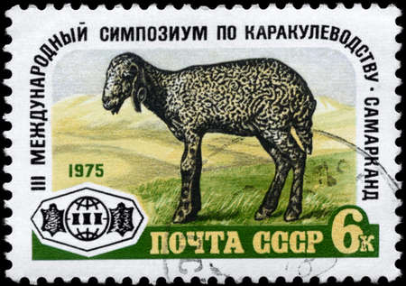 USSR - CIRCA 1975: A Stamp printed in USSR shows image of a Karakul Lamb and devoted to 3rd International Symposium on astrakhan production, Samarkand, circa 1975 photo