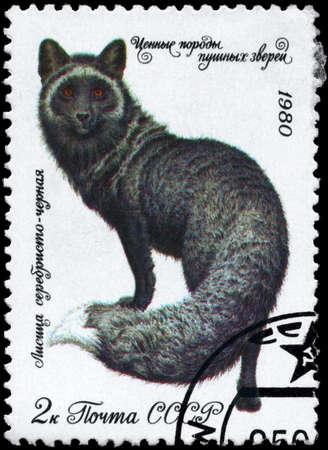 silver fox: URSS - alrededor de 1980: A sello impreso en USSR muestra im�genes de un zorro plateado oscuro de la serie Animales de peleter�a, alrededor de 1980 Foto de archivo