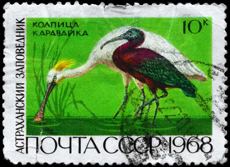 USSR - CIRCA 1968: A Stamp printed in USSR shows image of a Eurasian Spoonbill and Glossy Ibis from the series