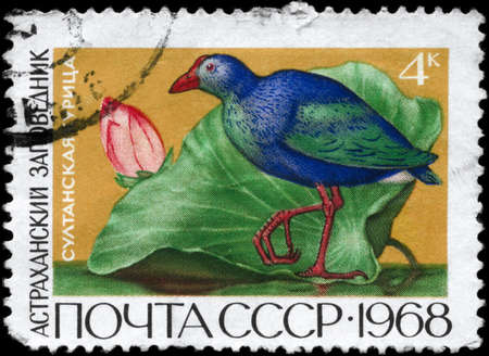 USSR - CIRCA 1968: A Stamp printed in USSR shows image of a Purple Swamphen from the series