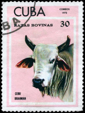 CUBA - CIRCA 1973: A Stamp printed in CUBA shows image of a Cow Cebu Brahman from the series Thoroughbred Cows, circa 1973 photo