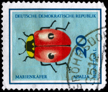 GERMAN DEMOCRATIC REPUBLIC - CIRCA 1968: A Stamp printed in GERMAN  DEMOCRATIC REPUBLIC shows the image of a Ladybug with the description Adalia  bipunctata L. from the series Insects, circa 1968 photo