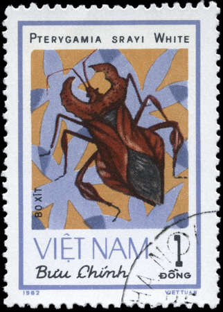 squash bug: VIETNAM - CIRCA 1982: A Stamp printed in VIETNAM shows the image of a Squash Bug with the description Pterygamia srayi White from the series ,Chinch Bugs, circa 1982