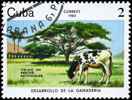 cattle breeding: CUBA - CIRCA 1984: A Stamp printed in CUBA shows image of a Grazing Cow with the description Artificial pastures from the series Cattle Breeding, circa 1984