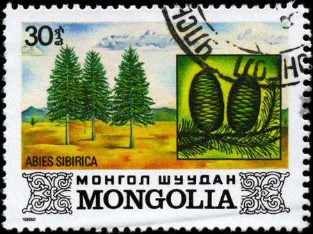 MONGOLIA - CIRCA 1982: A Stamp printed in MONGOLIA shows the Siberian Spruce, with the description